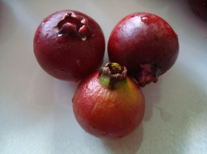 Close up of Guavitas